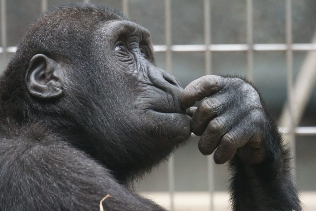 Black Gorrilla Thinking; understanding which open tunings to use for slide guitar, has challenged even some of the greatest intellectual minds.